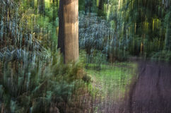 Nature Green Blurred Background. Blurred shot of a forest for background texture Royalty Free Stock Image