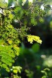 Nature green bokeh sunlight blur leaves background. stock photo