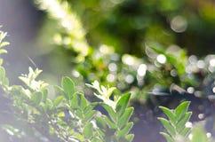 Nature green bokeh sunlight blur leaves background. stock photography