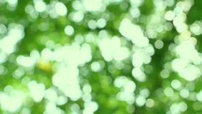 Nature Green Bokeh From Tree stock video footage