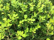 Nature green Stock Image