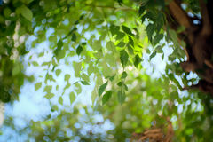 Nature Green Day Royalty Free Stock Images