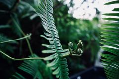 Power of green fern. Nature of Green fern Stock Photography