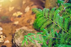 Nature green fern in rainforest. With sun light royalty free stock photography