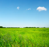 Green field under the blue sky Royalty Free Stock Image