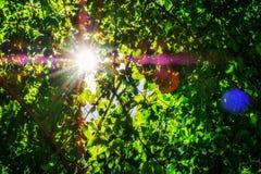 Nature, Green, Flora, Vegetation stock images