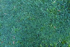 Nature green grass background top view Stock Photo