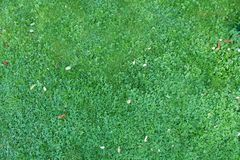Nature green grass background top view stock photos