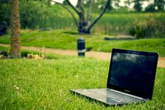 Nature, Green, Grass, Lawn Stock Images