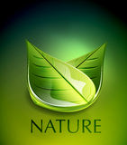 Nature green leaf concept Stock Photography