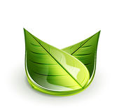 Nature green leaf concept Royalty Free Stock Images