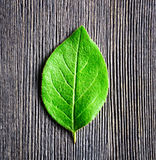 Green leaf lying on wooden board Royalty Free Stock Photography