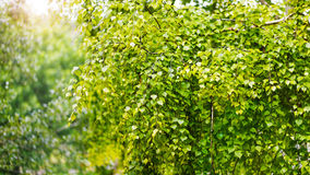 Nature green leaf plant and foliage background Royalty Free Stock Images