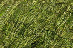 Nature, green, macro, meadow, background Stock Photography