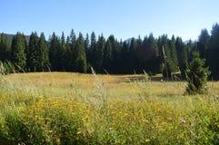 Nature, wilderness, mountines, green grass, flowers, stock photos