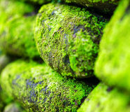 Green moss on old stone wall Stock Photography