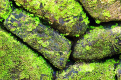 Green moss on old stone wall Stock Image