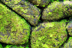 Green moss on old stone wall Royalty Free Stock Image