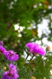 Nature green purple flower background summer. Spring and Stock Photography