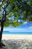 Green tree on a white sand beach Royalty Free Stock Photos
