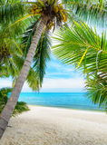 Green tree on a white sand beach Royalty Free Stock Image