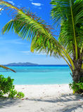 Green tree on a white sand beach Stock Photos