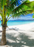 Green tree on a white sand beach Stock Photography