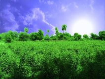 Nature. Green nature trees&plants Royalty Free Stock Photos