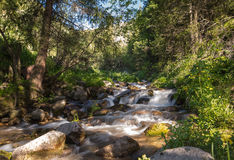 Nature of  green trees and river in Almaty, Kazakhstan Royalty Free Stock Image