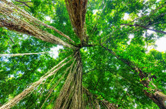 Green trees in tropical rainforest Stock Image