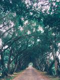 Nature green tunnel royalty free stock photography