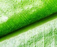 Green wet leaf close up Stock Images