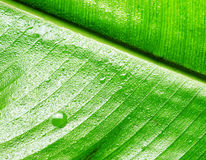 Green wet leaf close up Stock Photos