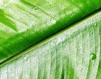 Green wet leaf close up. Shallow DOF Stock Image