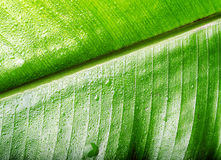 Green wet leaf close up. Shallow DOF Royalty Free Stock Images