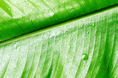 Green wet leaf close up. Shallow DOF Royalty Free Stock Image