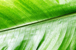 Green wet leaf close up. Royalty Free Stock Photos