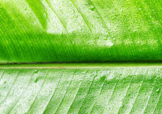 Green wet leaf close up Stock Photography