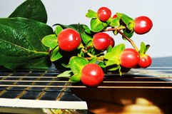 Nature and guitar strings, close-up. Red buds on a guitar, expressing the beauty of the nature, of life Stock Photography