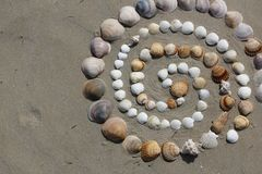 Nature harmony shells. The beautiful shells  of the seaside. There are shells of seaside of Spain. Life, nature, sea, seaside, shells, sand, summertime royalty free stock image