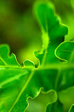 Nature in haywire macro royalty free stock images