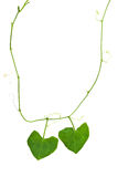 Nature heart necklace. By green leaf Stock Photos