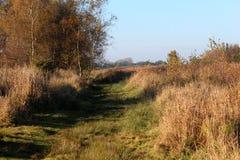 Nature heather path. Landscape overview in Kleine Wielen in autumn royalty free stock photo