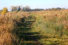 Nature heather path. Landscape overview in Kleine Wielen in autumn royalty free stock photos