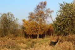 Nature heather path. Landscape overview in Kleine Wielen in autumn stock images