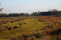 Nature heather path. Landscape overview in Kleine Wielen in autumn royalty free stock image