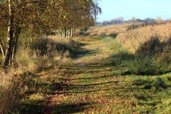 Nature heather path. Landscape overview in Kleine Wielen in autumn stock photography