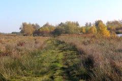 Nature heather path. Landscape overview in Kleine Wielen in autumn stock photos