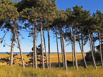 Nature on Hiddensee island Stock Images