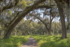 Nature Hiking Trail Stock Images